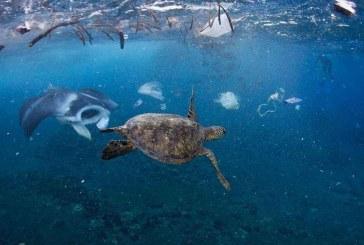 Изменение экологической ситуации и почему все должны в это вникать