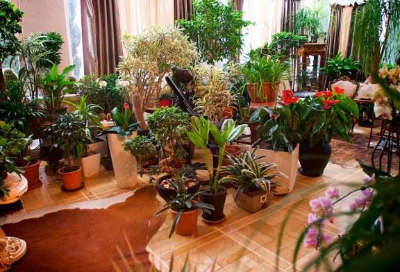 Растения в домашнем пространстве