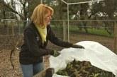 Как защитить растения, посевы и плодовые деревья от заморозков