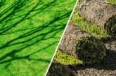 Зелёная лужайка. Или как выбрать и ухаживать за рулонным газоном